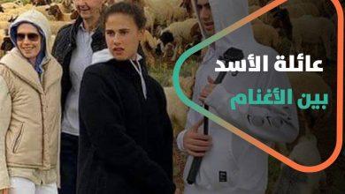 صورة عائلة الأسد بين الأغنام