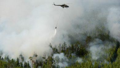 صورة ما أسباب موت غابات سيبيريا؟