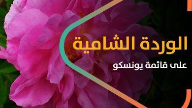 """صورة إدراج """"الوردة الشامية"""" على قائمة """"يونسكو"""".. ماذا تعرف عن هذه الوردة؟"""