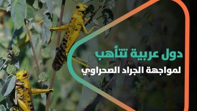 صورة من بينها سوريا.. دول عربية تتأهب لمواجهة الجراد الصحراوي