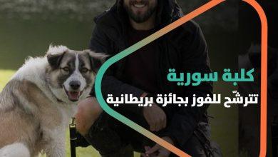 صورة كلبة سورية من الرقة تترشّح للفوز بجائزة بريطانية.. إليكم قصتها