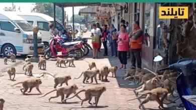 صورة حيوانات تتجول بأمان في شوارع العديد من المدن الخالية من البشر المحجورين في بيوتهم حول العالم