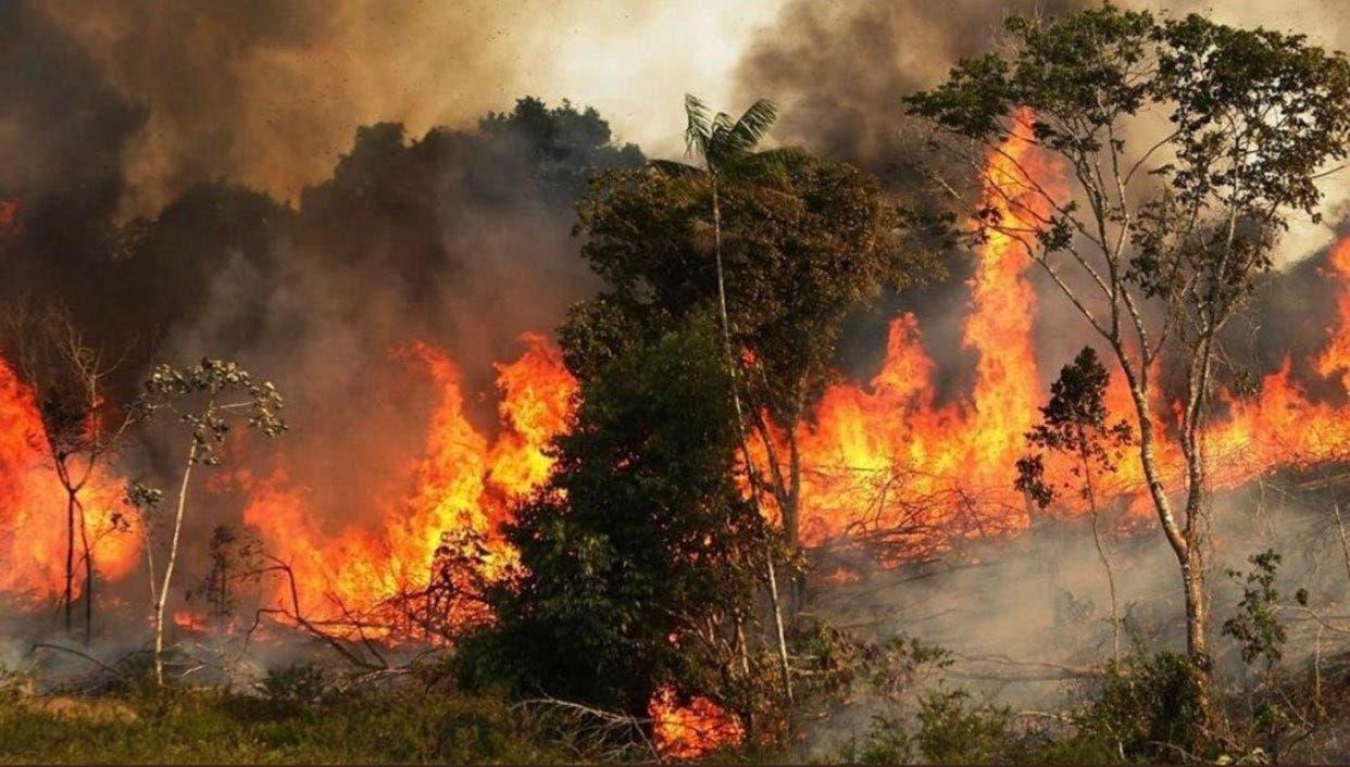 الحرائق في اللاذقية